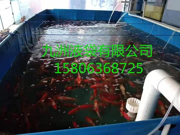 锦鲤养殖池